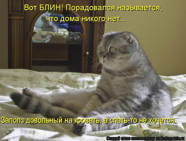 Котоматрица: Вот БЛИН! Порадовался называется,   что дома никого нет...  Заполз довольный на кровать, а спать-то не хочется.