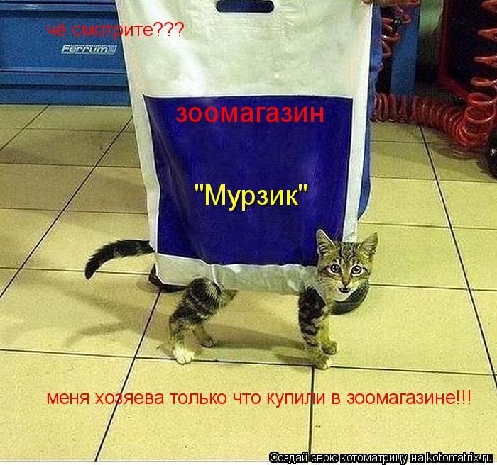 """Котоматрица: чё смотрите??? меня хозяева только что купили в зоомагазине!!! зоомагазин """"Мурзик"""""""