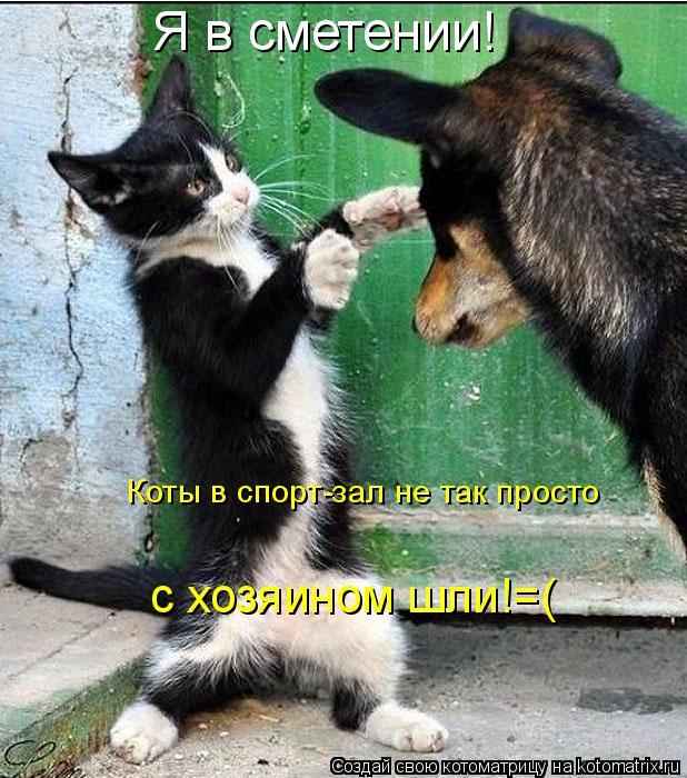 Котоматрица: Я в сметении! Коты в спорт-зал не так просто  с хозяином шли!=(