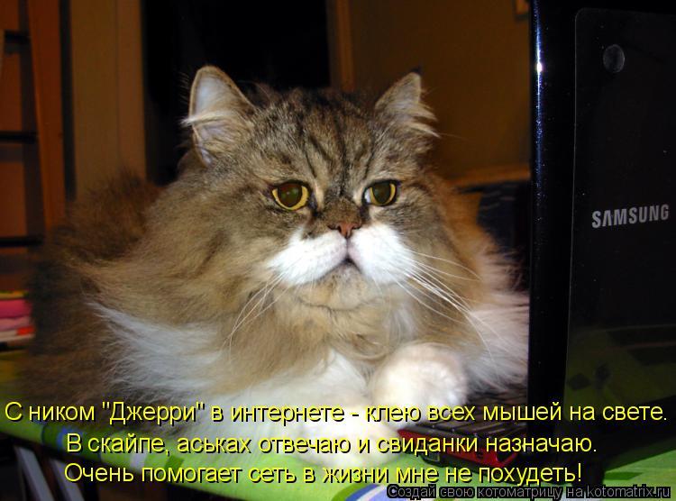 """Котоматрица: С ником """"Джерри"""" в интернете - клею всех мышей на свете. В скайпе, аськах отвечаю и свиданки назначаю. Очень помогает сеть в жизни мне не похуд"""