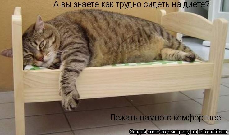 Котоматрица: А вы знаете как трудно сидеть на диете?! Лежать намного комфортнее