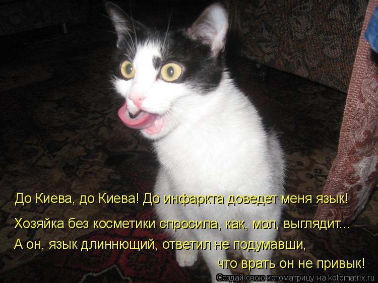 Котоматрица: До Киева, до Киева! До инфаркта доведет меня язык! Хозяйка без косметики спросила, как, мол, выглядит... А он, язык длиннющий, ответил не подума