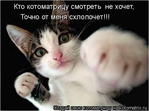 Котоматрица: Кто котоматрицу смотреть  не хочет, Точно от меня схлопочет!!!