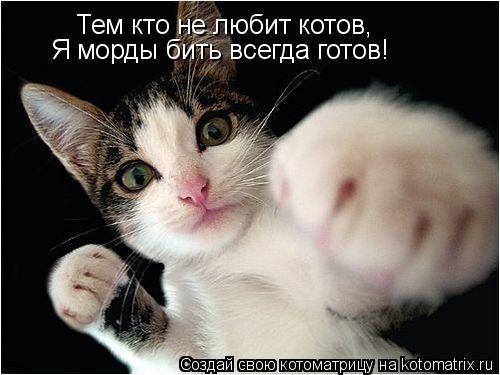 Котоматрица: Тем кто не любит котов, Я морды бить всегда готов!