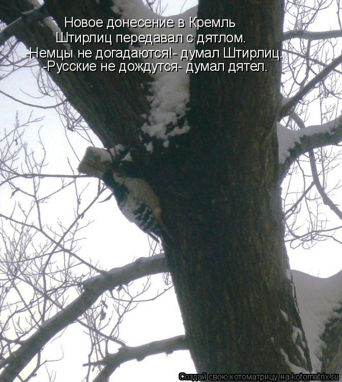 Котоматрица: Новое донесение в Кремль Штирлиц передавал с дятлом. -Немцы не догадаются!- думал Штирлиц. -Русские не дождутся- думал дятел.