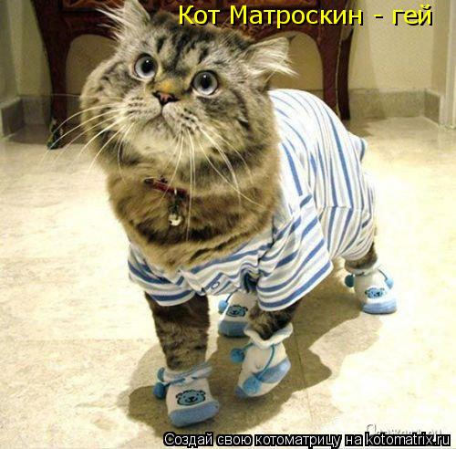 Котоматрица: Кот Матроскин - гей Кот Матроскин - гей