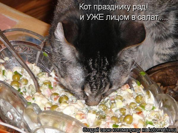Котоматрица: Кот празднику рад! и УЖЕ лицом в салат.....