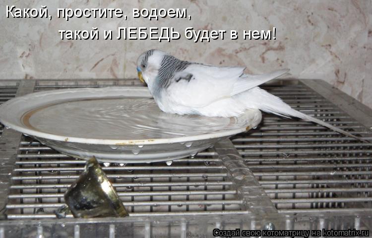 Котоматрица: Какой, простите, водоем, такой и ЛЕБЕДЬ будет в нем!