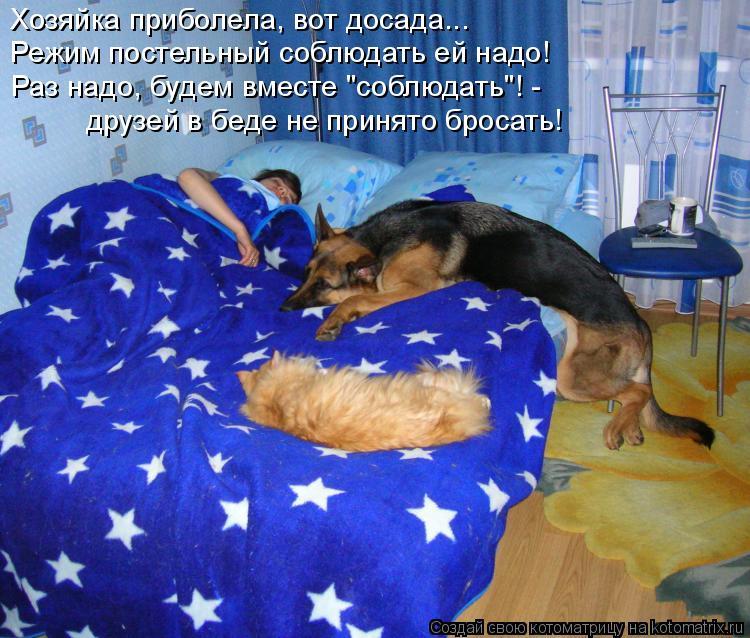 """Котоматрица: Хозяйка приболела, вот досада... Режим постельный соблюдать ей надо! друзей в беде не принято бросать! Раз надо, будем вместе """"соблюдать""""! -"""