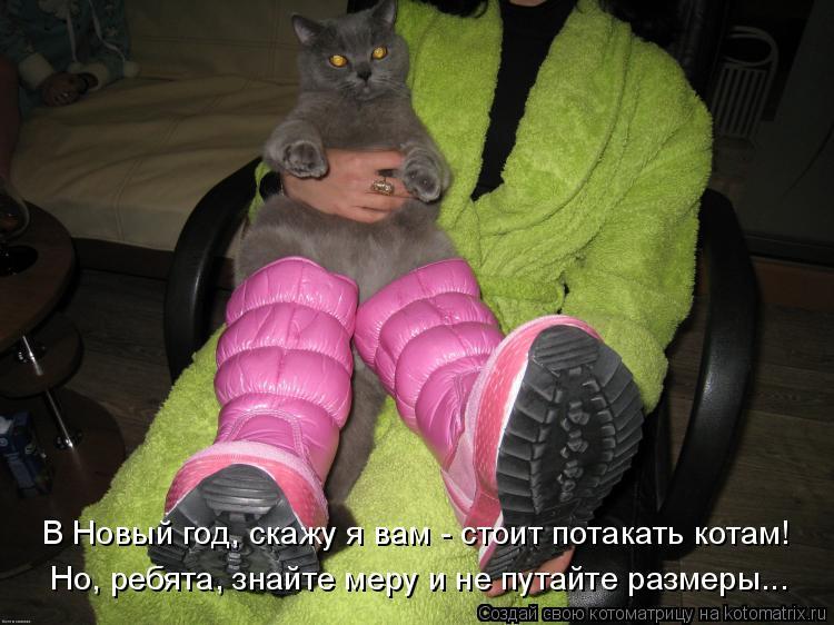 Котоматрица: В Новый год, скажу я вам - стоит потакать котам! Но, ребята, знайте меру и не путайте размеры...