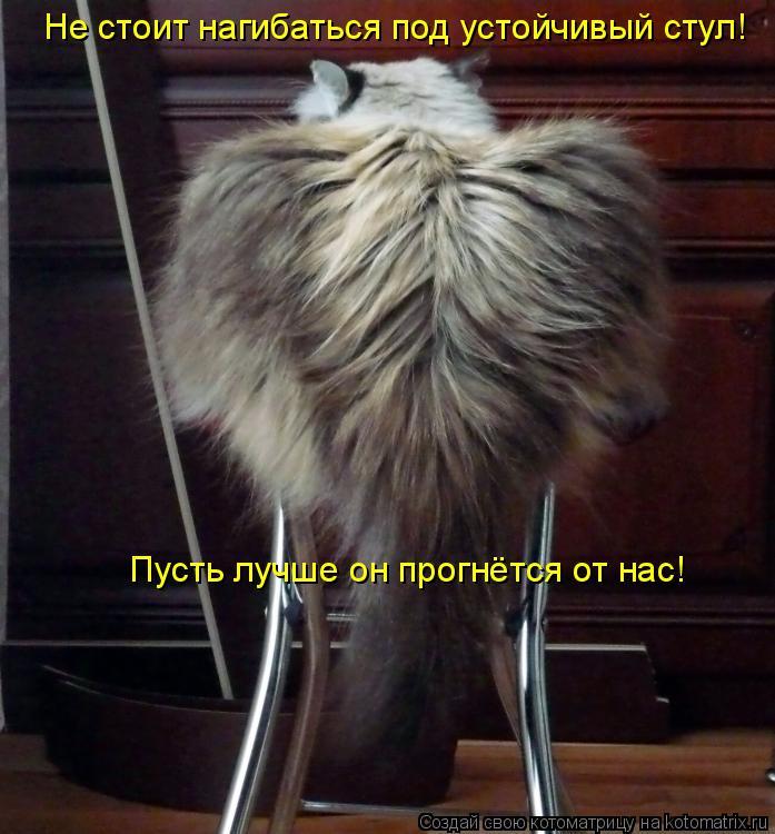 Котоматрица: Не стоит нагибаться под устойчивый стул! Пусть лучше он прогнётся от нас!