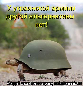 Котоматрица: У украинской армиии другой альтернативы нет!