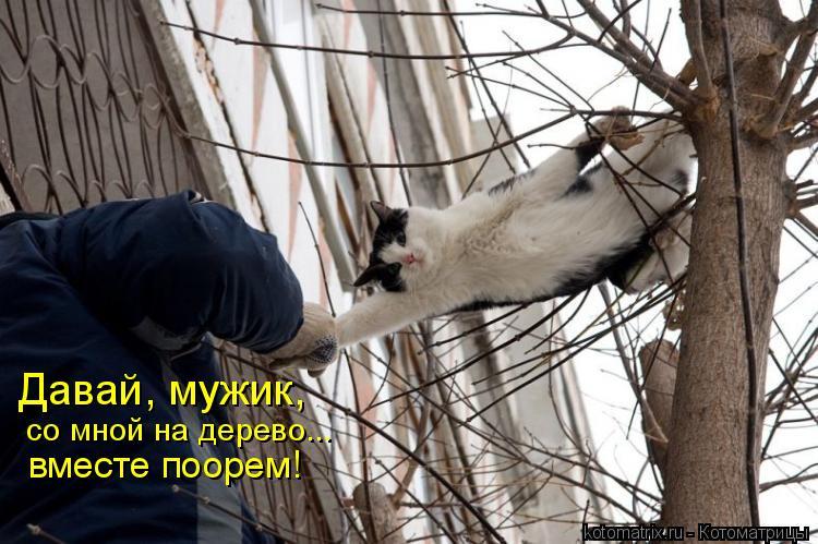 Котоматрица: Давай, мужик,  со мной на дерево... вместе поорем!