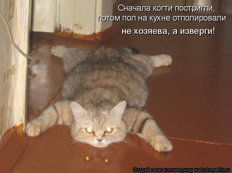 Котоматрица: Сначала когти постригли, потом пол на кухне отполировали не хозяева, а изверги!