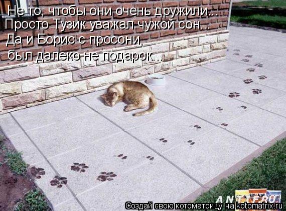 Не то, чтобы они очень дружили... Просто Тузик уважал чужой сон... Да