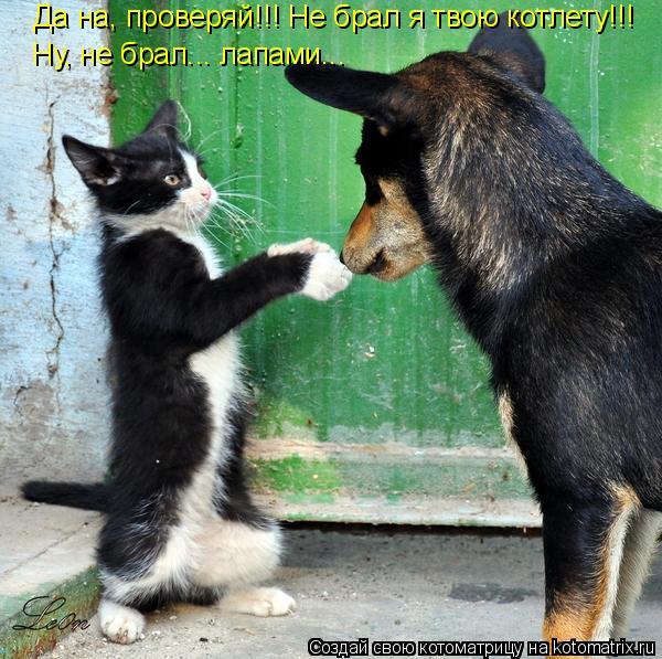 Котоматрица: Да на, проверяй!!! Не брал я твою котлету!!! Ну, не брал... лапами...