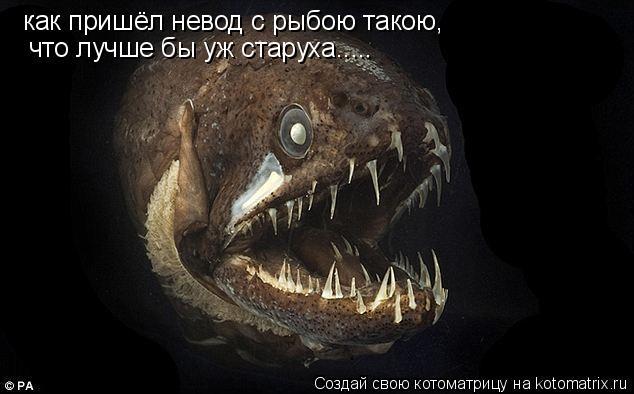 Котоматрица: как пришёл невод с рыбою такою, что лучше бы уж старуха.....