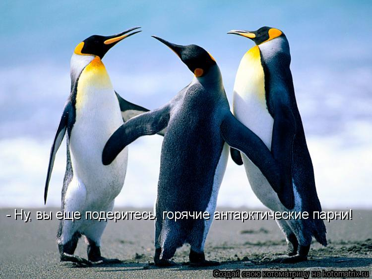 Котоматрица: - Ну, вы еще подеритесь, горячие антарктические парни!