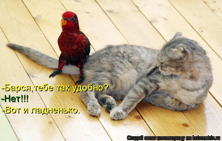 -Барся,тебе так удобно? -Нет!!! -Вот и ладненько.