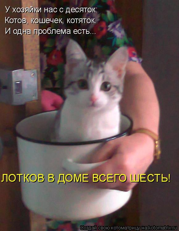 Котоматрица: У хозяйки нас с десяток: Котов, кошечек, котяток. И одна проблема есть... ЛОТКОВ В ДОМЕ ВСЕГО ШЕСТЬ! ЛОТКОВ В ДОМЕ ВСЕГО ШЕСТЬ!