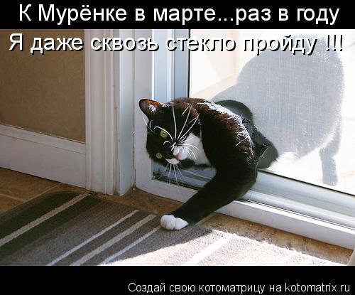 Котоматрица: К Мурёнке в марте...раз в году Я даже сквозь стекло пройду !!!