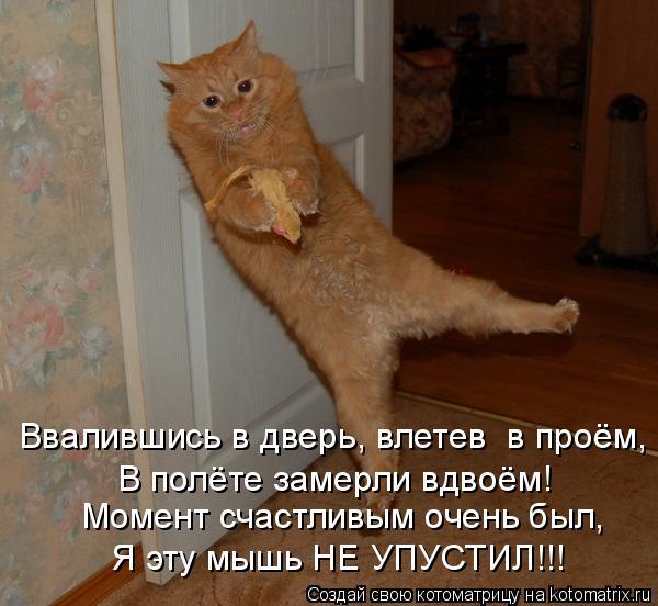 Котоматрица: Ввалившись в дверь, влетев  в проём, В полёте замерли вдвоём! Момент счастливым очень был, Я эту мышь НЕ УПУСТИЛ!!!