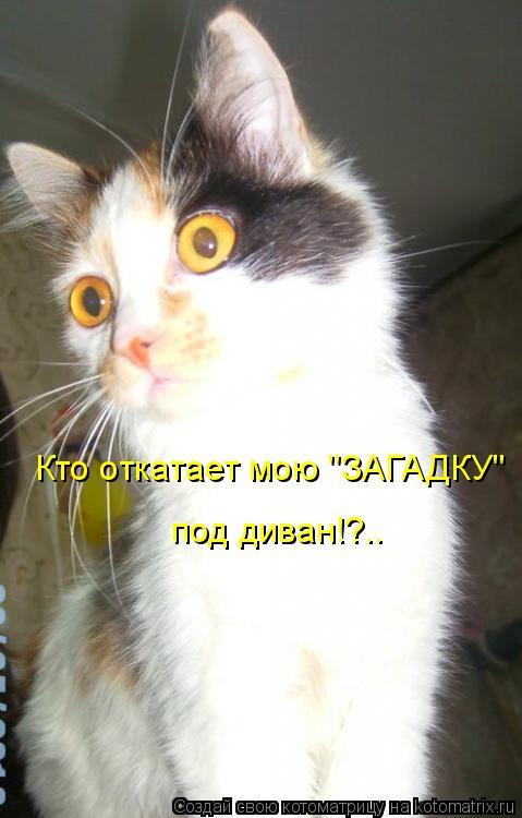 """Котоматрица: Кто откатает мою """"ЗАГАДКУ""""  под диван!?.."""