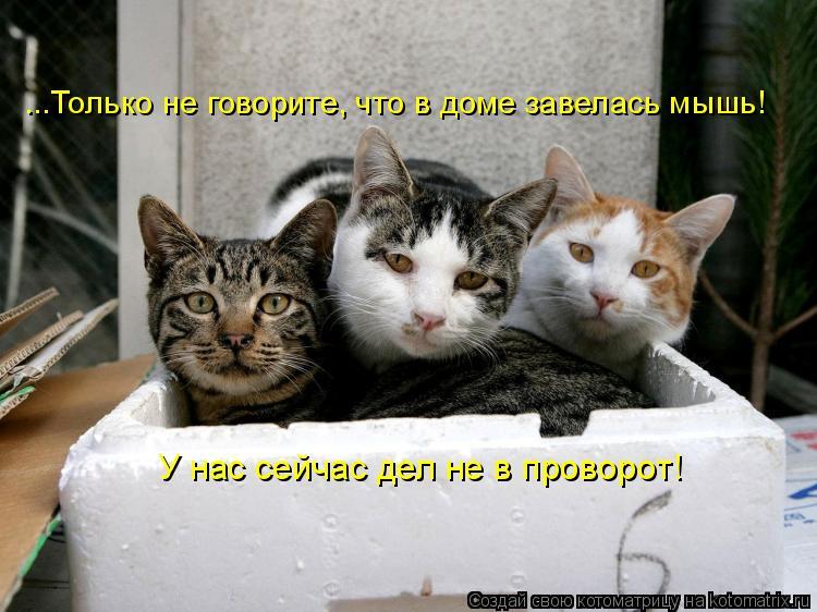 Котоматрица: ...Только не говорите, что в доме завелась мышь! У нас сейчас дел не в проворот!
