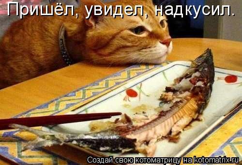 Котоматрица: Пришёл, увидел, надкусил.