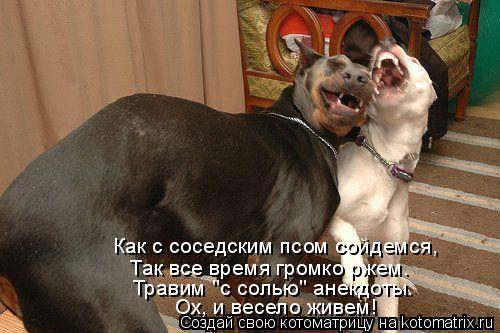 """Котоматрица: Как с соседским псом сойдемся, Так все время громко ржем. Травим """"с солью"""" анекдоты. Ох, и весело живем!"""