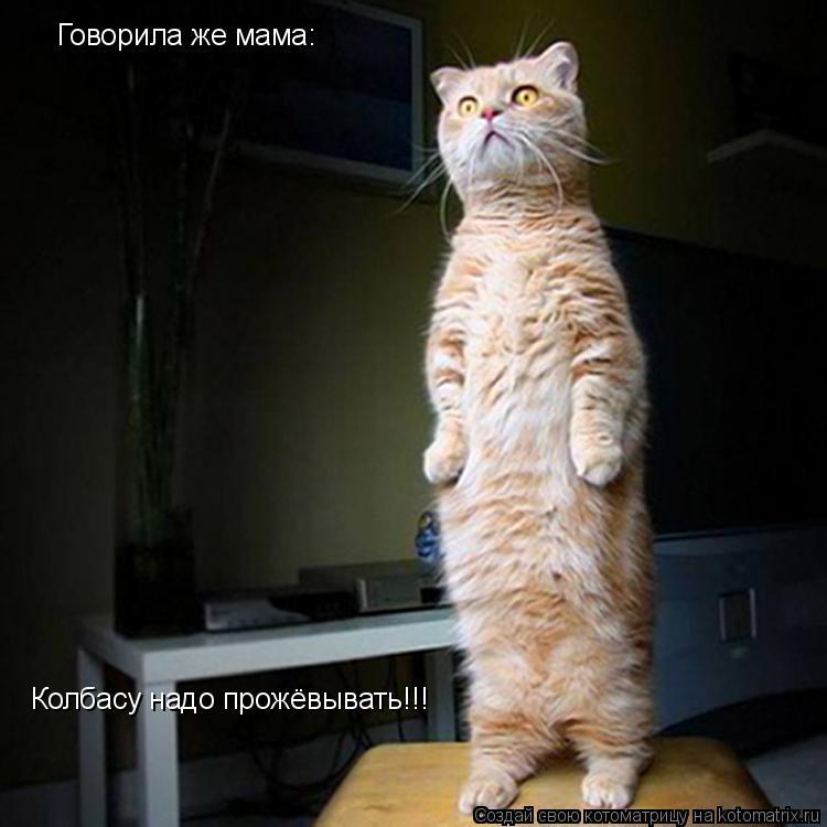 Котоматрица: Говорила же мама: Колбасу надо прожёвывать!!!