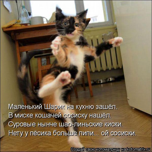 Котоматрица: Маленький Шарик на кухню зашёл. В миске кошачей сосиску нашёл. Суровые нынче шао-линьские киски. Нету у пёсика больше пипи... ой сосиски.