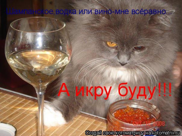 Котоматрица: А икру буду!!! Шампанское,водка или вино-мне всёравно...
