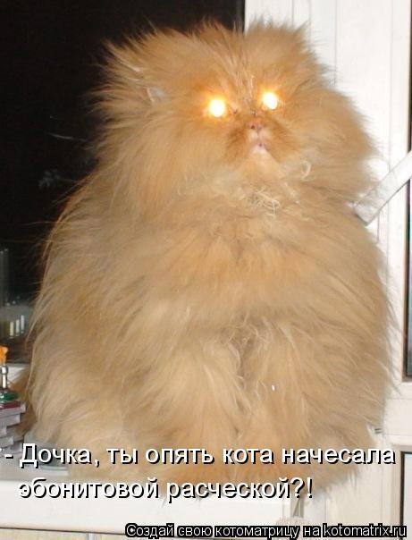 Котоматрица: - Дочка, ты опять кота начесала эбонитовой расческой?!