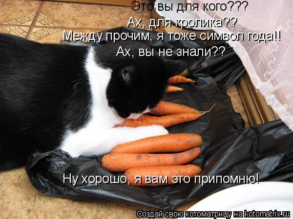 Котоматрица: Это вы для кого??? Ах, для кролика?? Между прочим, я тоже символ года!! Ах, вы не знали?? Ну хорошо, я вам это припомню!