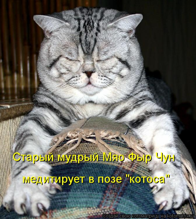 "Котоматрица: Старый мудрый Мяо Фыр Чун медитирует в позе ""котоса"""