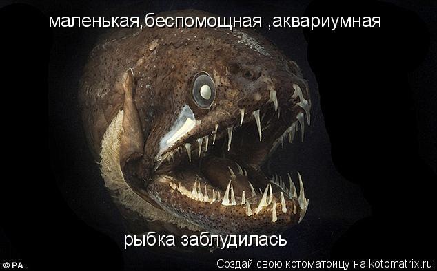 Котоматрица: маленькая,беспомощная ,аквариумная рыбка заблудилась