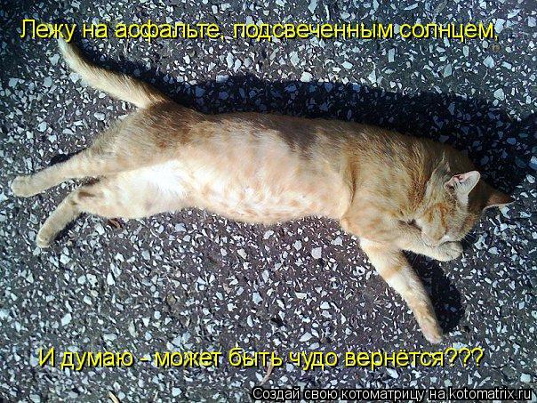 Котоматрица: Лежу на асфальте, подсвеченным солнцем, И думаю - может быть чудо вернётся???