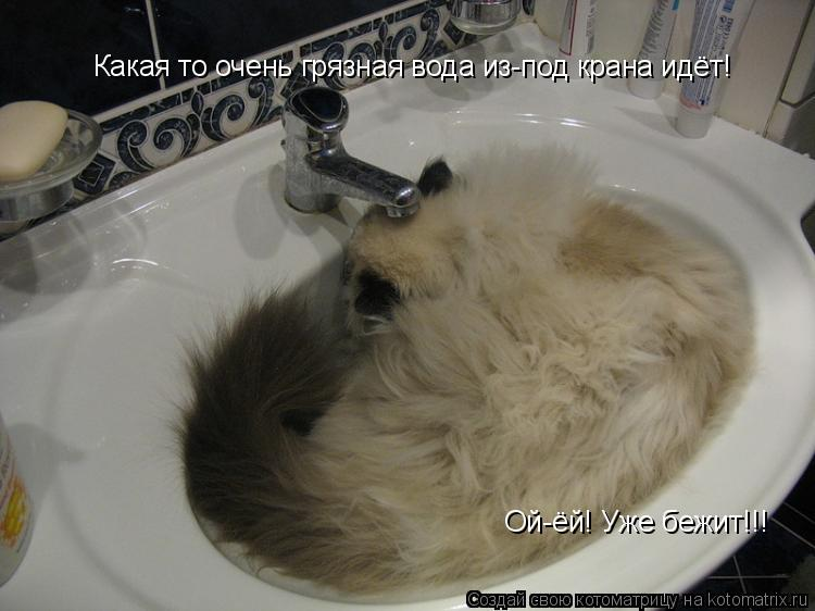 Котоматрица: Какая то очень грязная вода из-под крана идёт! Ой-ёй! Уже бежит!!!