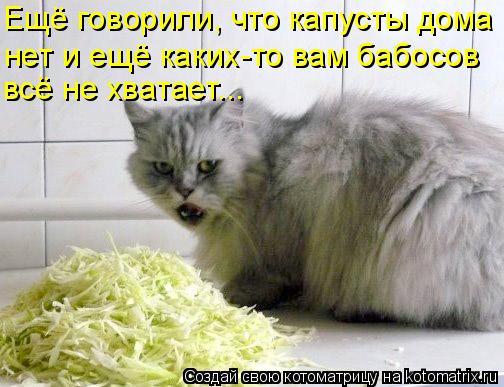 Котоматрица: всё не хватает... Ещё говорили, что капусты дома нет и ещё каких-то вам бабосов
