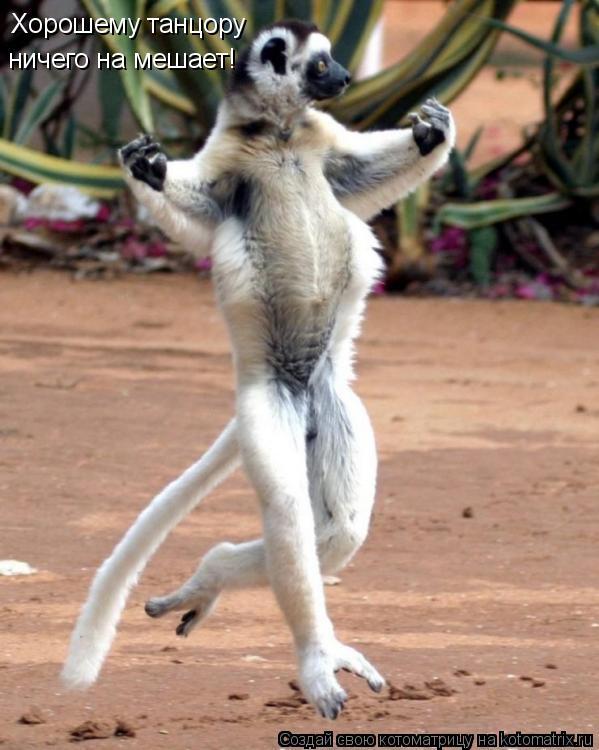 Котоматрица: Хорошему танцору ничего на мешает!