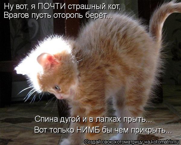 Котоматрица: Ну вот, я ПОЧТИ страшный кот, Врагов пусть оторопь берёт... Вот только НИМБ бы чем прикрыть... Спина дугой и в лапках прыть...