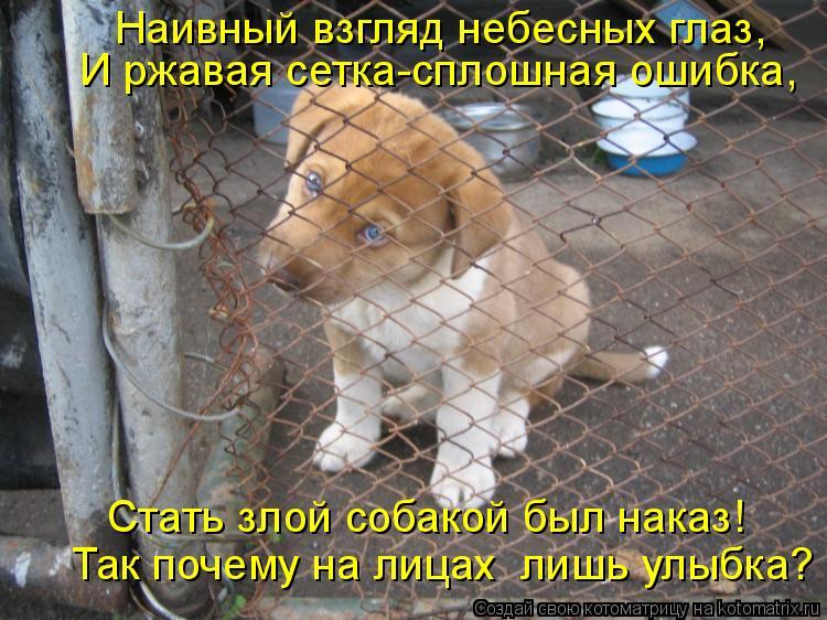 Котоматрица: И ржавая сетка-сплошная ошибка,  Стать злой собакой был наказ!  Наивный взгляд небесных глаз,  Так почему на лицах  лишь улыбка?