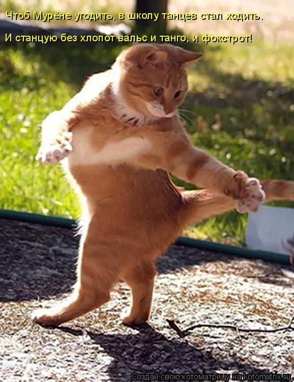 Котоматрица: Чтоб Мурёне угодить, в школу танцев стал ходить. И станцую без хлопот вальс и танго, и фокстрот!