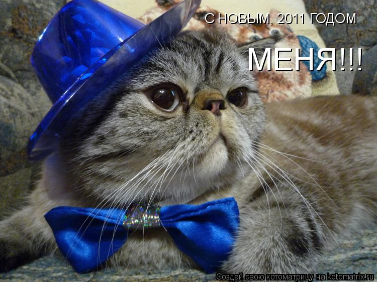 Котоматрица: С НОВЫМ, 2011 ГОДОМ МЕНЯ!!!