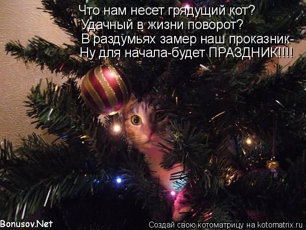 Котоматрица: Что нам несет грядущий кот? Удачный в жизни поворот? В раздумьях замер наш проказник- Ну для начала-будет ПРАЗДНИК!!!!