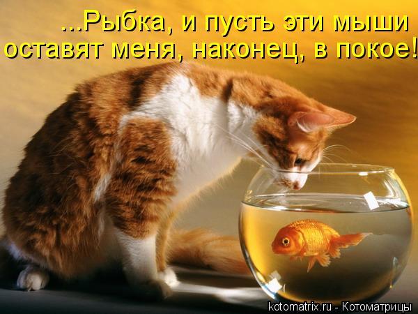 ...Рыбка, и пусть эти мыши оставят меня, наконец, в покое!