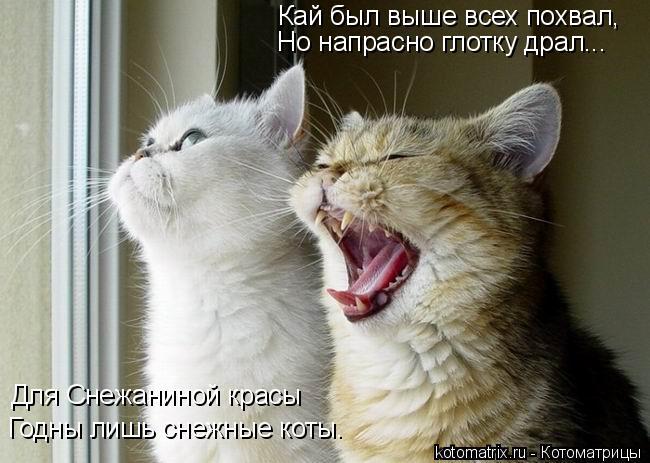 Котоматрица: Кай был выше всех похвал, Но напрасно глотку драл... Для Снежаниной красы Годны лишь снежные коты.