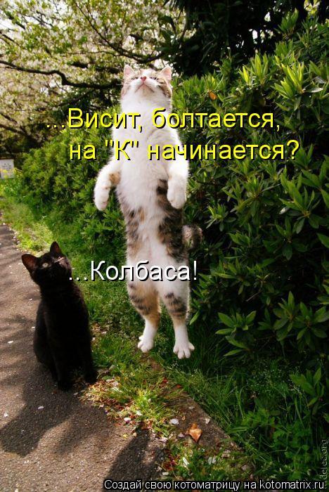 """Котоматрица: ...Висит, болтается, на """"К"""" начинается? ...Колбаса!"""