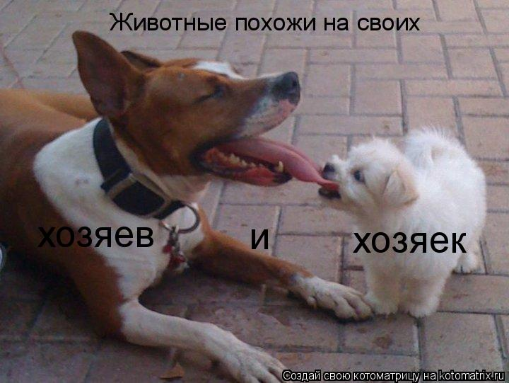 Котоматрица: Животные похожи на своих хозяев и хозяек